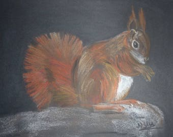 gorgeous squirrel drawn in PASTELS dry size 21 X 28 cm on black paper