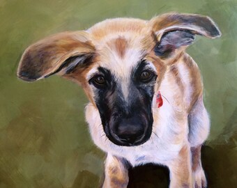 Chinook Puppy, painted portrait, 11x14