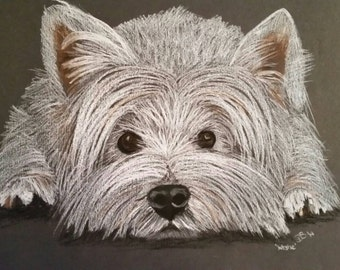 A3 westie picture in oil pastels