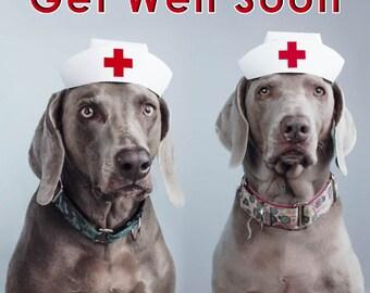 Get Well Soon Weimaraner Greeting Card - Blank