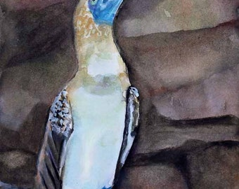 Blue Footed Booby,Original Watercolor Painting,Galapagos,Watercolor Painting,Animal Art,Prints,Giclee Prints,Free Shipping,Carol Lytle,#103