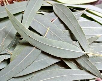 Eucalyptus Leaves, 100gram, Dried Eucalyptus, Green Leaves, Long Leaves, Green Table Confetti, Scrapbooking