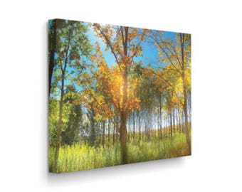 Fall Trees on Canvas