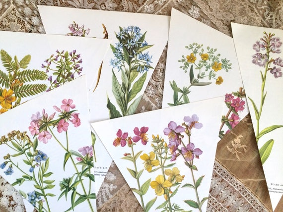 12 diy vintage wild flower botanical prints bunting garland set 12 12 diy vintage wild flower botanical prints bunting garland set 12 book page botanicals cut ready to do it yourself wedding birthday decor from solutioingenieria Images