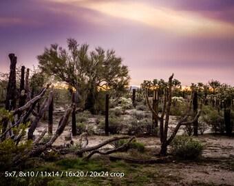 Desert Ranch Sunrise Arizona Color