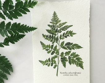 Leather Neck Fern Art Print in 2 Sizes
