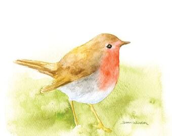 Robin Watercolor Painting 14x11 Giclee Print Woodland Animal Fine Art Bird Watcher
