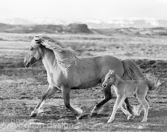 Wild Horses, Black and White Horse Photography, Mama and Baby Horse, Wild Horse Print, Horse Print, Horse Lover Gift, Icelandic Horse Print
