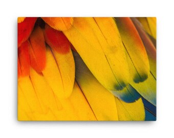 Scarlet Macaw Wing Canvas