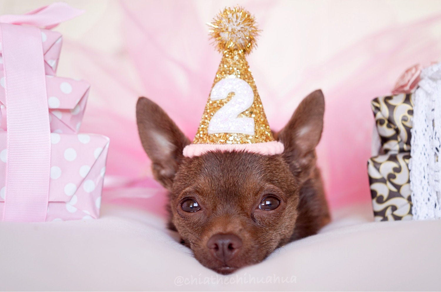 Excellent Dog Birthday Party Outfit || Animal Birthday Hat || Pet Birthday  OU58