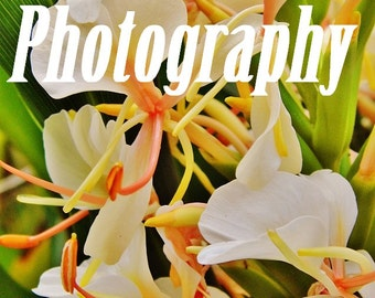 Flor blanca por Deanna Bernal