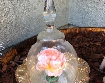Vintage glass cloche, bell dome glass cloche, dome glass cloche, glass terrarium
