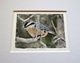 Nuthatch hand tinted photo-etching