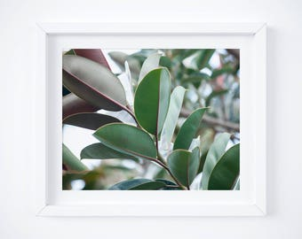 Nature photograph - Large wall art - Garden print - Green wall art - Framed fine art photography - Large art