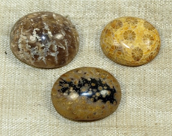 A Trio of Cool Fossilized Coral Cabochons from the Lou Zeldis Collection; LOUZELDIS2008_F