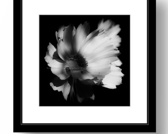 Square Print, Nature Photography, 12 x 12 inch just ready for Ikea Ribba prematted frame, Office, Wall Decor