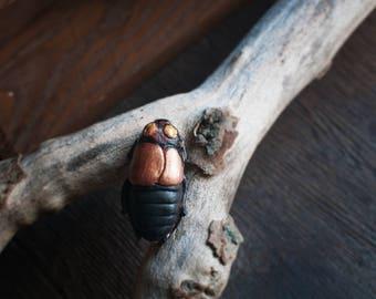 Glowspot Roach Brooch