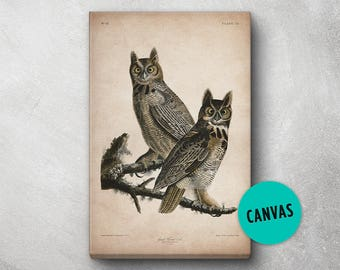 Audubon Bird Print, Canvas, Owl Print, Birds of America, John James Audubon, Large Print, Wall Art, Pink Flamingo, Large wall art