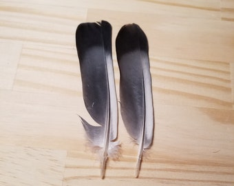 Gray Pigeon Feathers Cruelty Free Humane Naturally Molted Real Feathers #b24