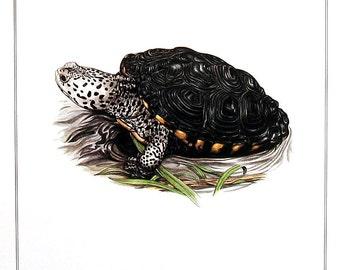 Tidal Marsh Turtle - Diamond Back Terrapin - Animal Print - 1982 Vintage Book Page - 7.5 x 10