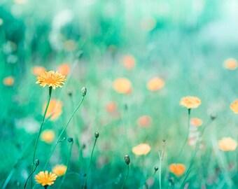 botanical teal art print 8x10 24x36 dandelion photography flowers home decor golden teal summer sun yellow blue orange pastels