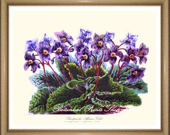"African Violet. Horizontal Print. Purple Flower Print. Botanical Print. Purple Flowers. Saintpaulia. 8x10"" 11x14"""