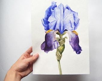 Watercolor painting| Flower painting| Original watercolor painting| Botanical illustration| Iris painting|  Floral painting| IRIS