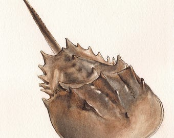 "Horseshoe Crab - Print of Original Art 5"" x 7"" watercolor and ink Giclee archival"