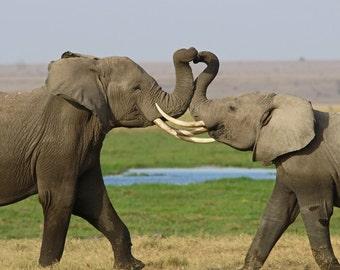 Elephants Twisting Trunks into Heart Shape - Notecard Valentine Fine Art Romance