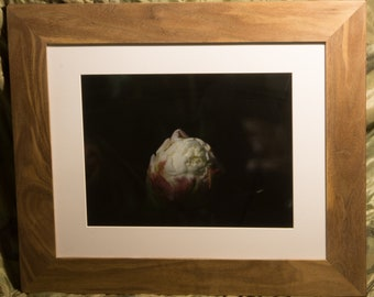 Framed White and Red Rose Photograph