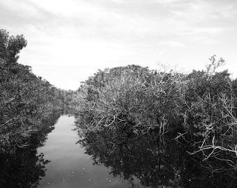 Mangrove [Sanibel Island, FL]