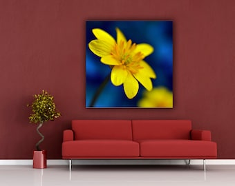 Yellow Buttercup Flower Photograph, Yellow and Blue Square Print, Yellow Flower Wall Art Home Decor, Macro Photograph, Fine Art Photography