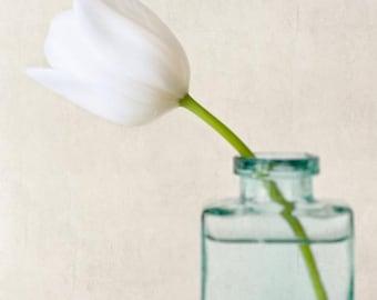Flower Photograph, Fine Art Photography, Floral Art Print, Botanical Art Print, Spring Flower Photography Print, White Tulip