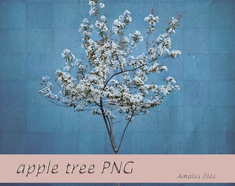 Apple tree PNG overlay clear cut apple blossoms blooming tree