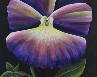 The purple pansy
