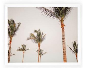 Palm Trees Photography / Landscape / Home Photography Decor / Art Print / Tropical / Beach / Wall Art / Photography Decor. Palm Trees Print