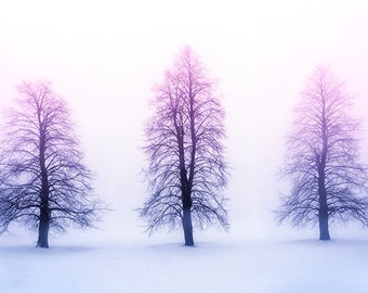 Winter Trees in Fog - SKU 0225