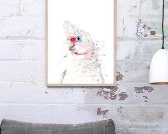 Australian Long-billed Corella Art Print A3, A2 & A1 Bird Watercolour Illustration giclee art print