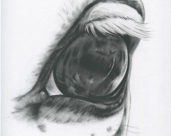 White Horse Eye, Horse Drawing, Charcoal Eye, Horse Art, Farm Art, Equine Art, Equine Eye, Charcoal Drawing, Horse Sketch