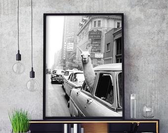 Black and White  Llama in a taxi Alpaca print New York prints Retro Poster vintage Llama Poster Alpaca Decor Llama Wall Art