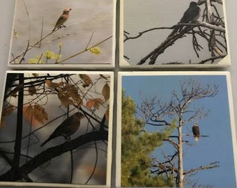 Set of 4 waterproof bird photo coasters