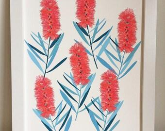 Callistemon Giclee Print