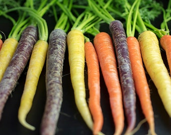Carrots All In A Row