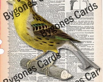 Dictionary page ephemera for use in junk journals, bird on a dictionary page