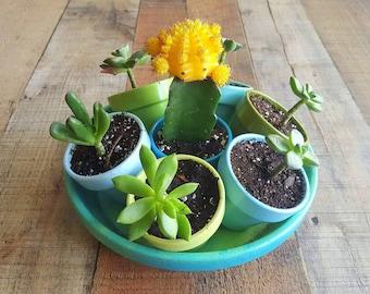 Painted Flower Pots - Succulent Planters - Succulent Set - Herb Planters - Garden Art - Garden Gifts - Centerpieces