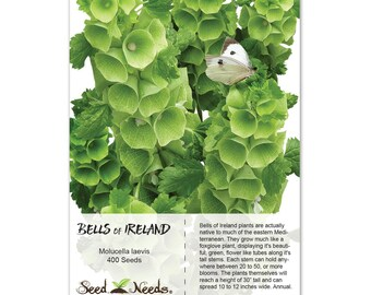 Bells of Ireland Seeds (Molucella laevis) Open Pollinated Seeds by Seed Needs