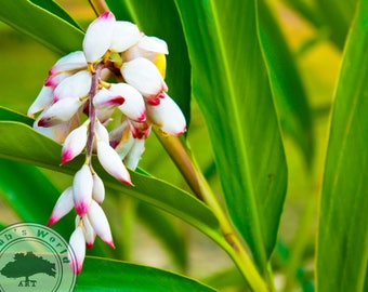 Plant Life Photography | Morning In The Tropics | Digital Download