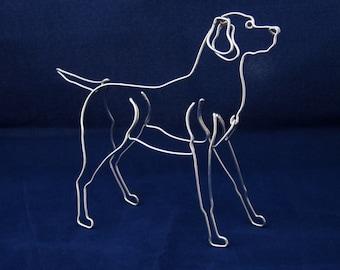Wire Labrador Retriever