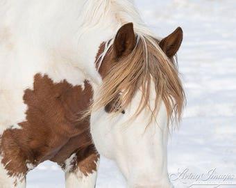 Painted Desert Comes Close - Fine Art Wild Horse Photograph - Wild Horse - Black Hills Sanctuary - Fine Art Print