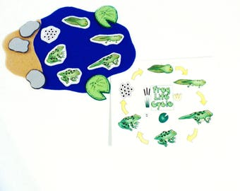 Kids Felt Learning Life Cycle of a Frog